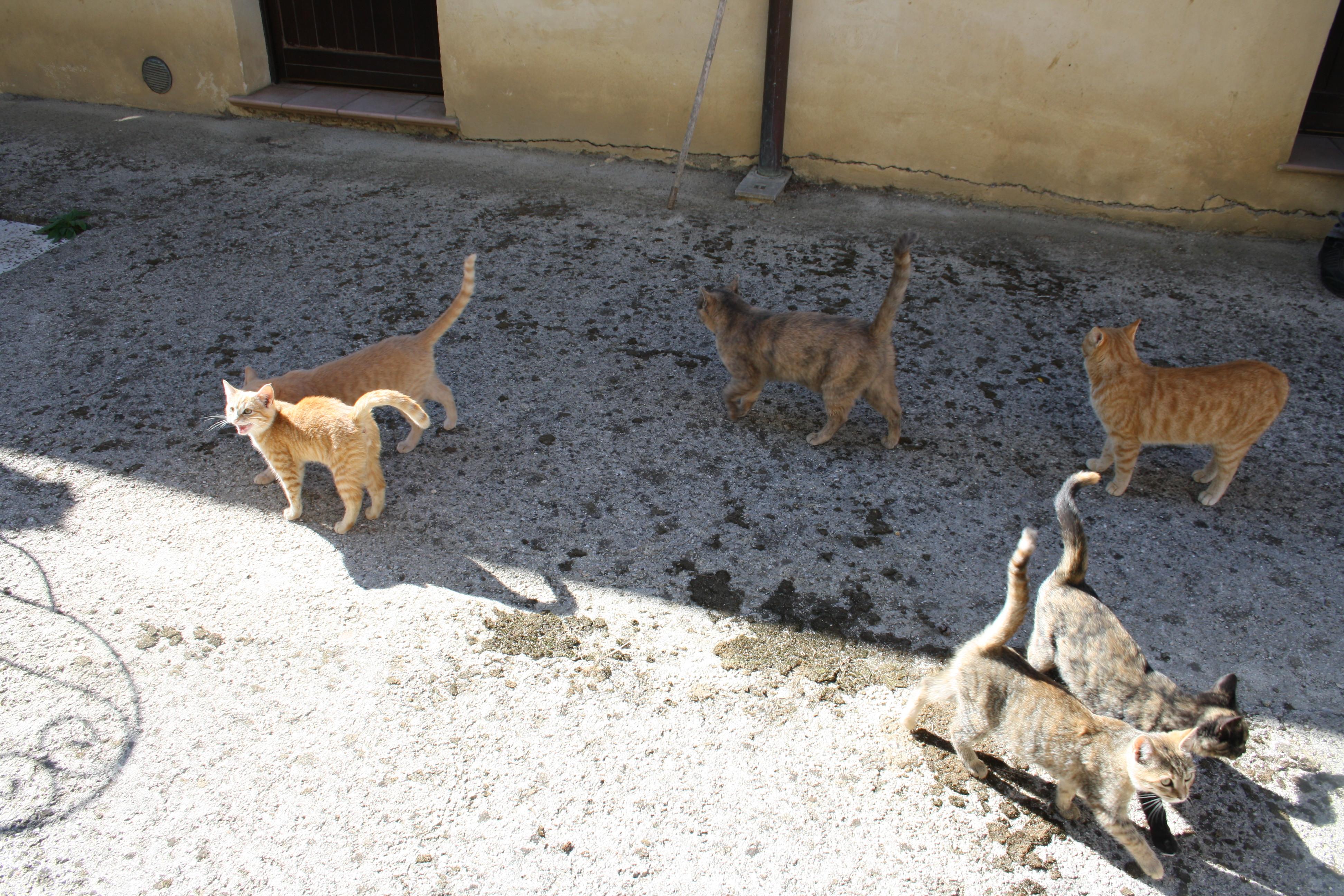 Gli amici Gatti all'Agriturismo il Colle di Valtopina