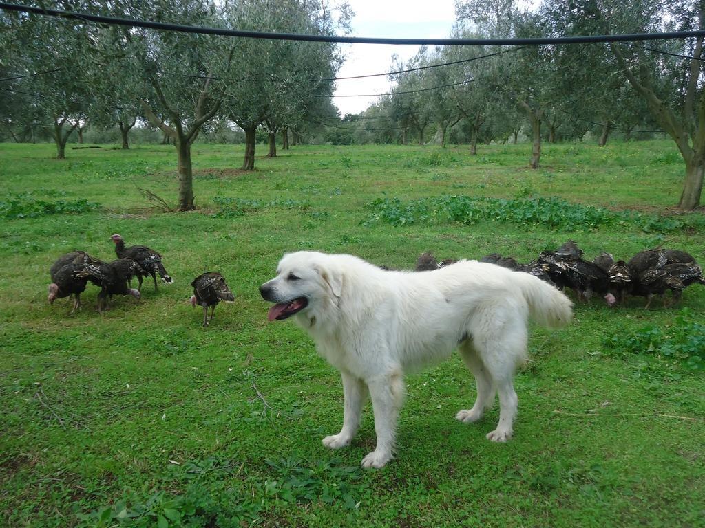 Animali della fattoria in Agriturismo a Spoleto