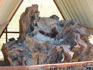 Foresta Fossile di Dunarobba – Avigliano Umbro (TR)