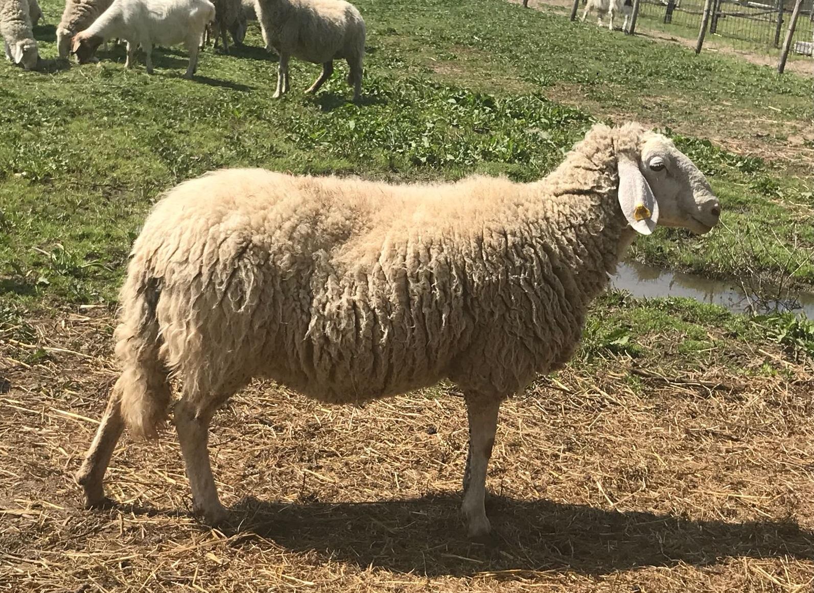 Agriturismo con animali da cortile vicino Assisi