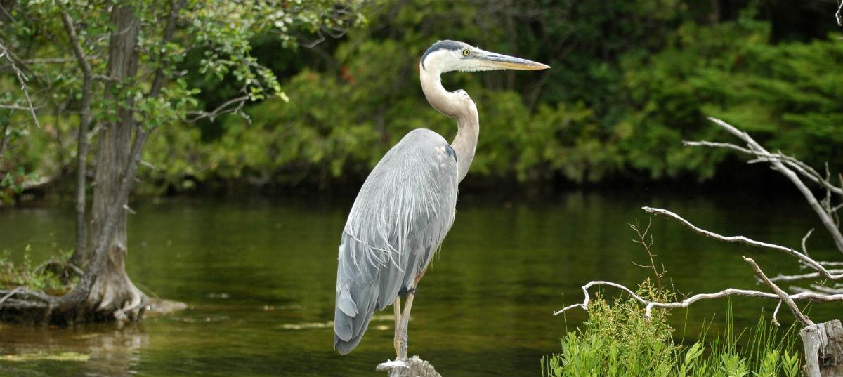Parco Oasi WWF del Lago di Alviano – Terni e Viterbo