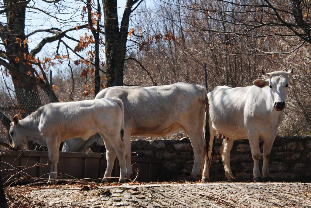 FESTA DEI LAVORATORI in vacanza in Agriturismo con Animali in Valnerina