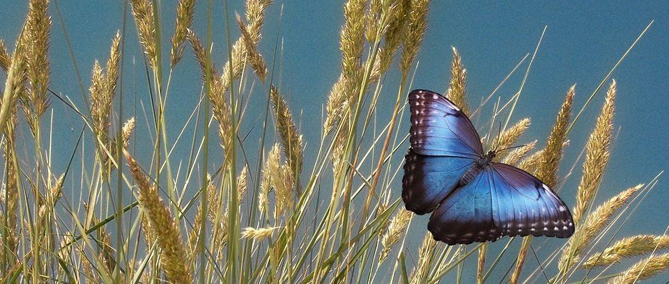 PARCO SETTEFRATI: pic nic tra boschi e farfalle sul Monte Peglia