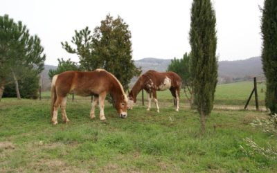 AGOSTO in Fattoria Umbra con Piscina, Ristorante e tanti animali!