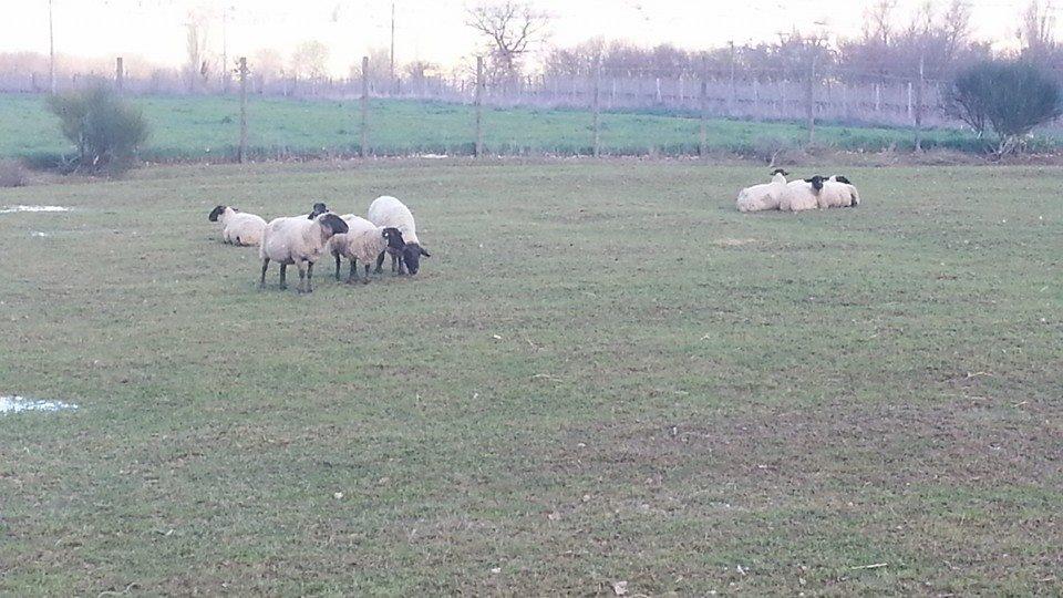 Agriturismo con animali sui Monti Martani