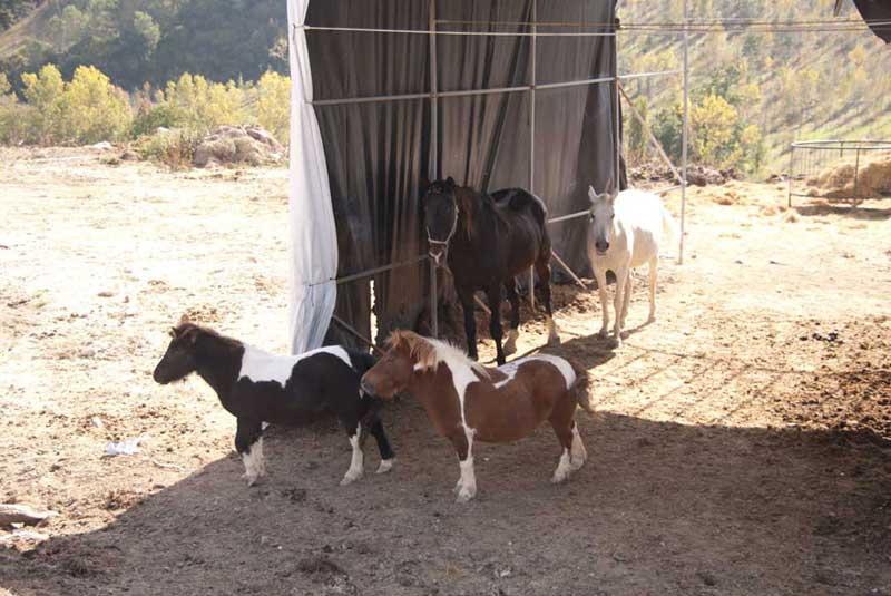 Agriturismo con cavalli e pony a Spoleto