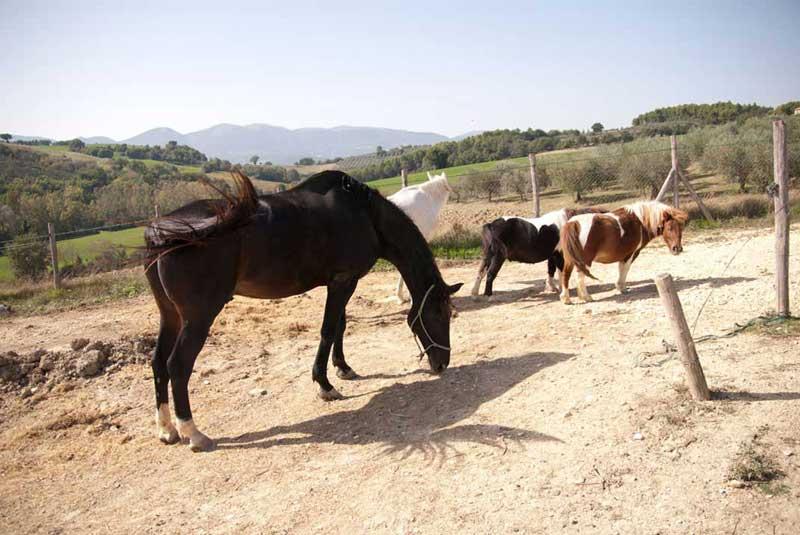 Agriturismo con fattoria didattica con cavalli a Spoleto