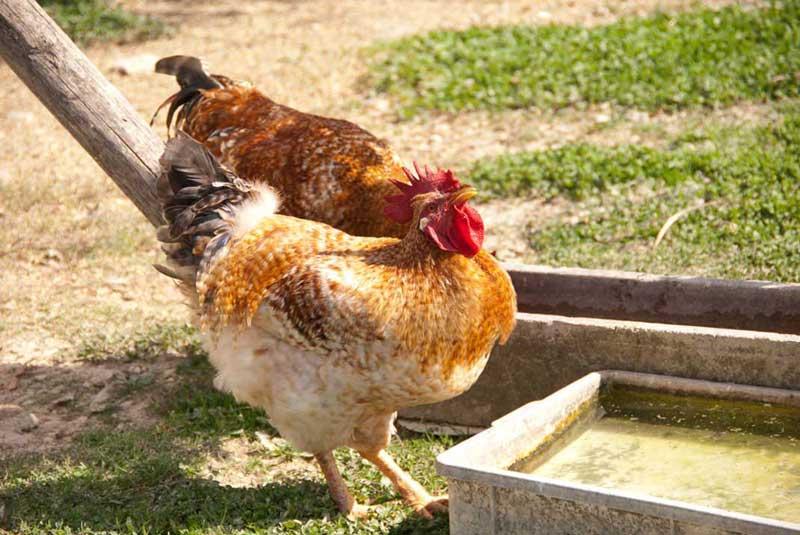 Animali in fattoria a Spoleto