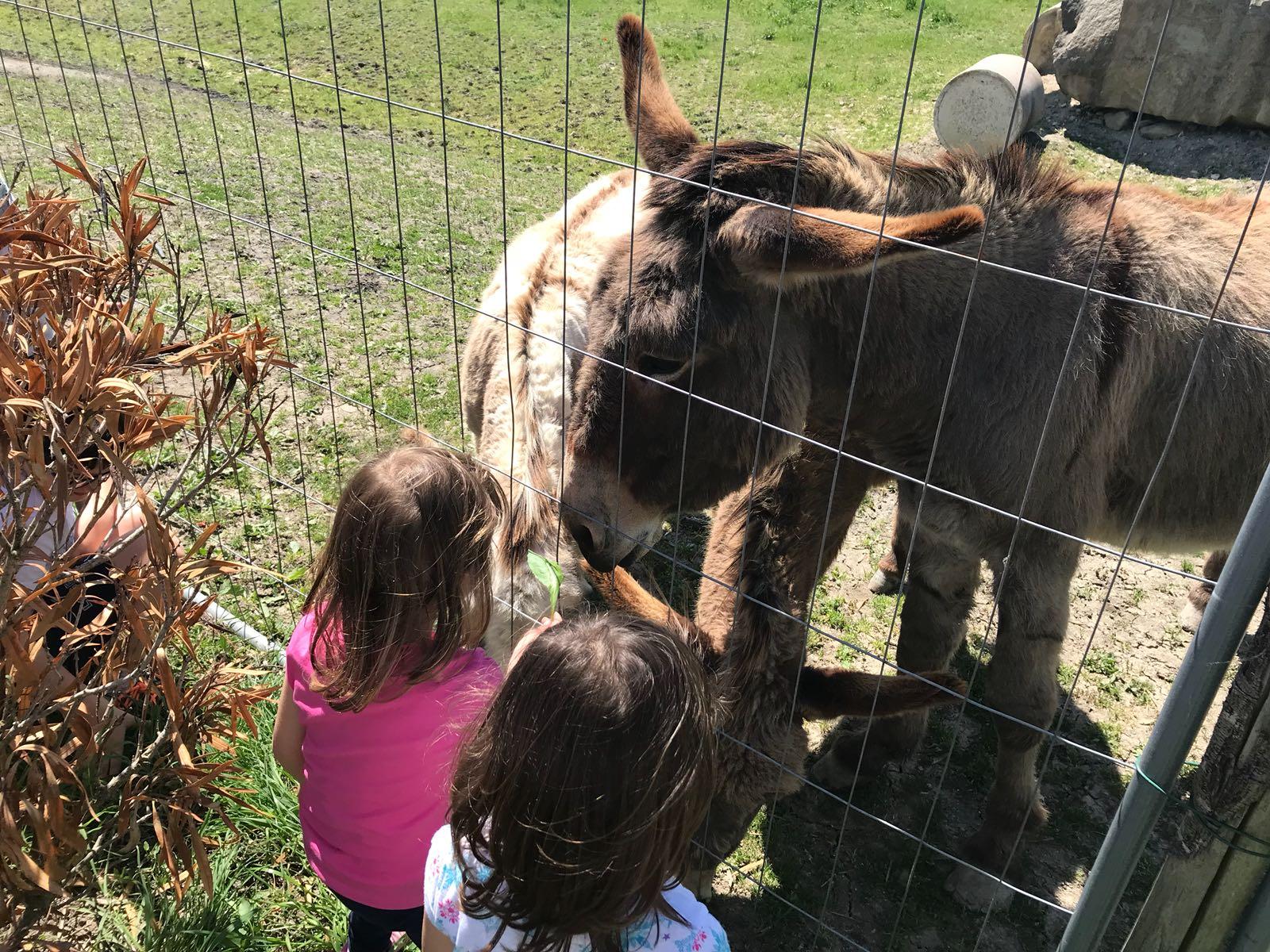 Bambini a vedere gli animali in Umbria