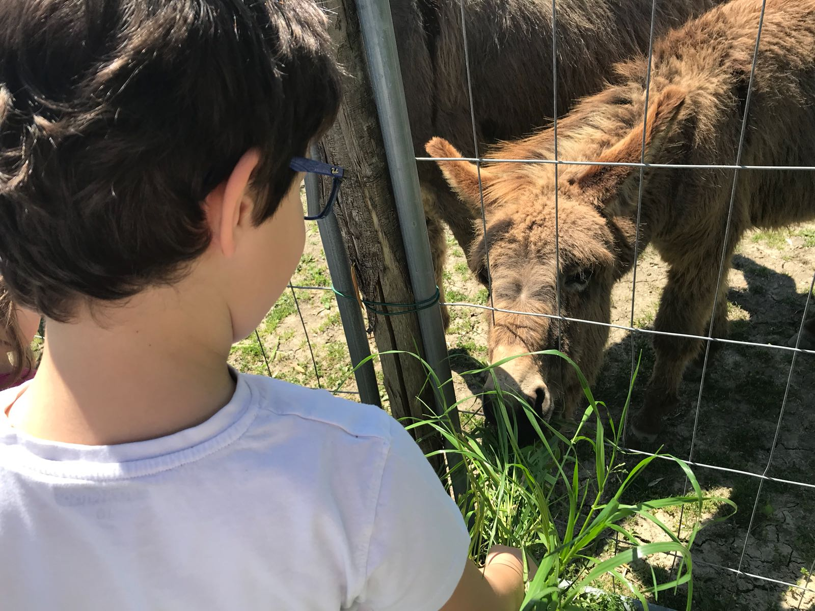 Cosa fare con i bambini a Gualdo Cattaneo