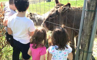 Gita di fine anno in Parco Umbro con Trenino, Animali, Museo e Laboratorio!
