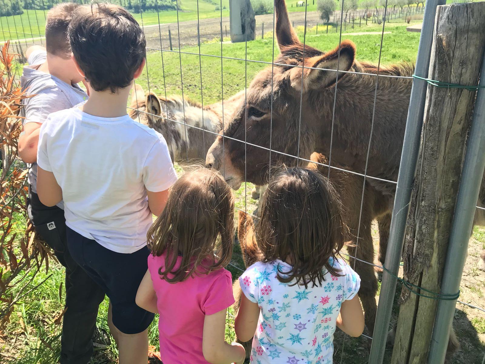 Gita di fine anno animali trenino e museo trattore ad Acquarossa