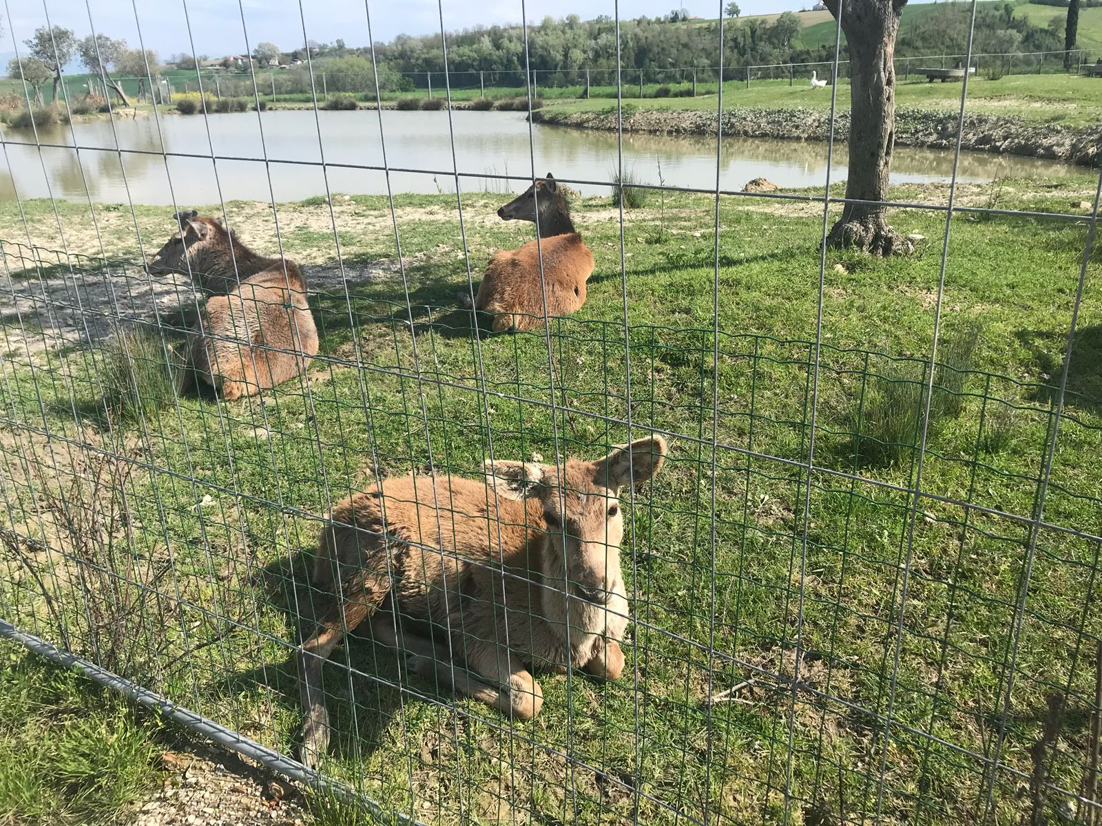 Parco con animali da vedere con bambini in Umbria
