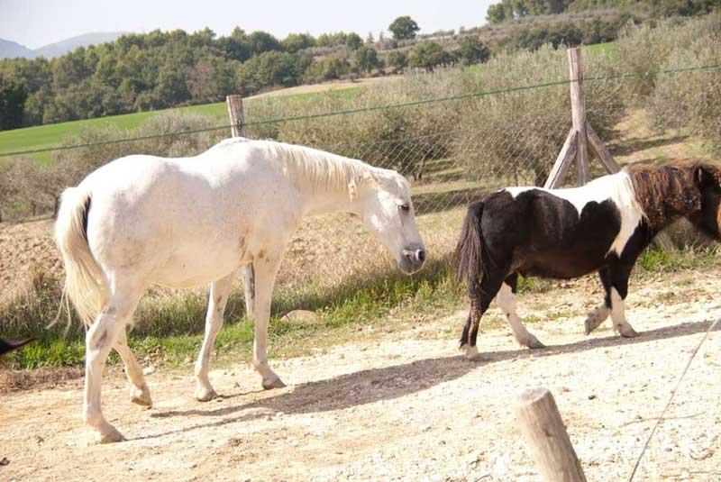 Visitare una fattoria didattica in Umbria