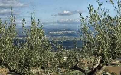 Agriturismo a 5 Spighe con piscina e ristorante la Fattoria di Assisi