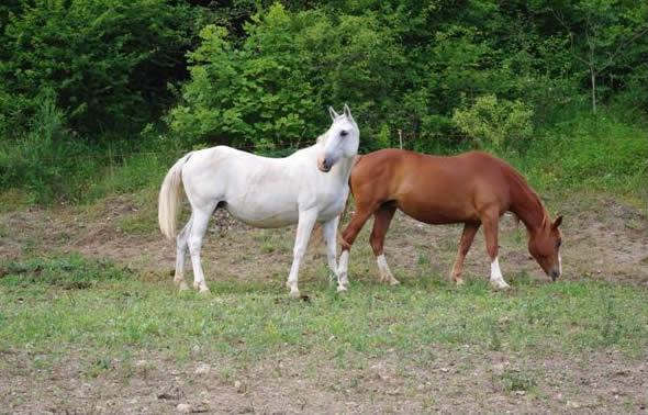 Agriturismo con cavalli a Cascia