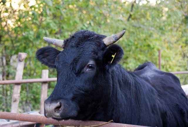 Azienda agricola con tanti animali in agriturismo a Cascia