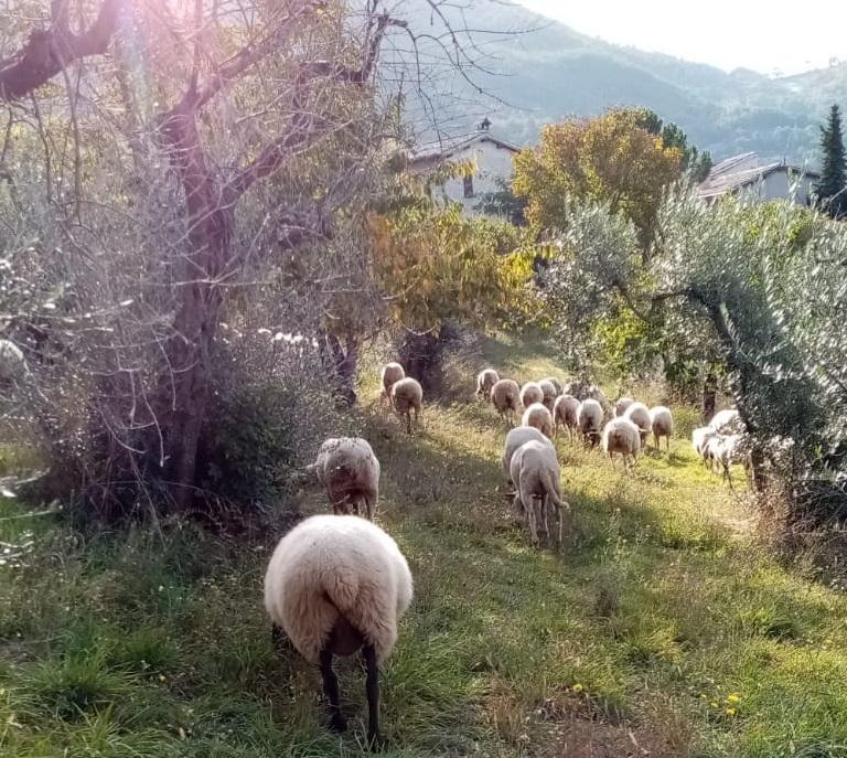 Esperienze in agriturismo con animali in Umbria