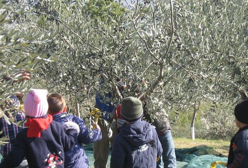 Esperienze scolastiche in agriturismo in Umbria
