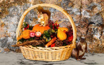 Lastminute OGNISSANTI in Agriturismo con animali in Umbria