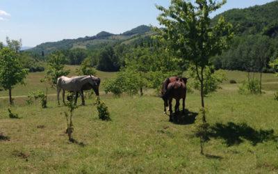Offerta 8 Dicembre in Umbria in Agriturismo con animali