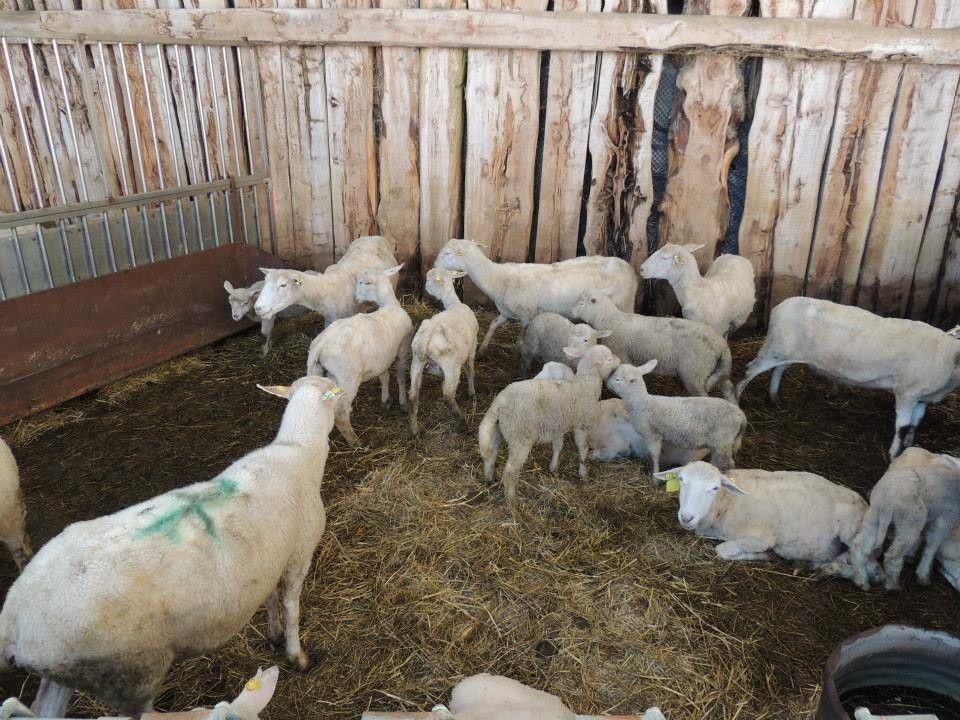 Vacanze tra gli animali e la natura in agriturismo vicino Assisi