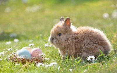 Pasqua in Umbria in agriturismo a Cascia con animali e ristorante tipico