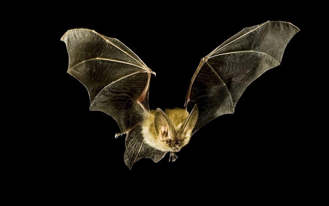 A caccia di pipistrelli al Bosco di San Francesco di Assisi!