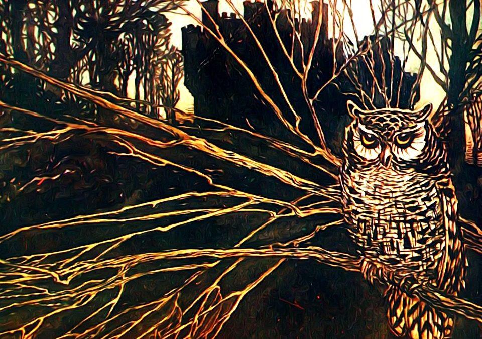 Alla scoperta delle Creature Notturne del Bosco di San Francesco ad Assisi