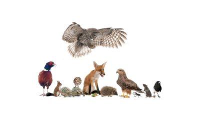 Selvatica 2020: sulle tracce degli animali con bambini ad Assisi