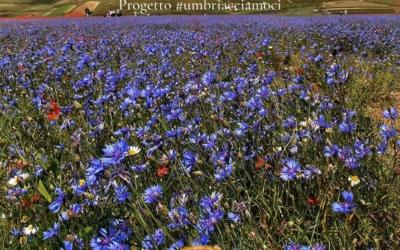 """Un progetto per ripartire: """"Ti aspettiamo in Umbria"""""""