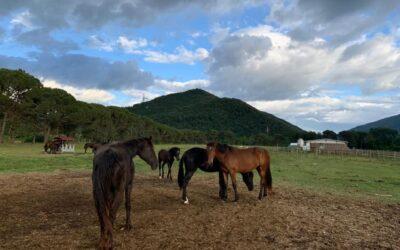 SETTEMBRE in Valnerina in Agriturismo B&B con tanti animali vicino alle Marmore