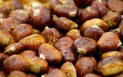Raccolta CASTAGNE e pranzo tipico in Agriturismo in Umbria