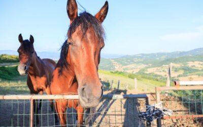 WEEKEND in fattoria didattica a 5 spighe in Umbria!