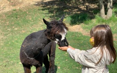 Offerta WEEKEND in Country House con piscina, alpaca e vineria in Umbria