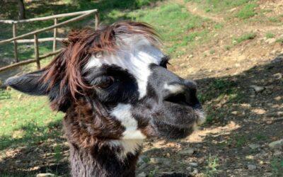 Offerta EPIFANIA in Country House con alpaca e vineria tra Umbria e Toscana