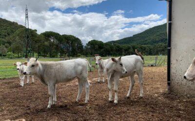 Pacchetto 8 DICEMBRE in Valnerina in Agriturismo con animali alle Marmore