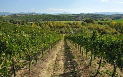 Pacchetto EPIFANIA in agriturismo con produzione vino a Spoleto