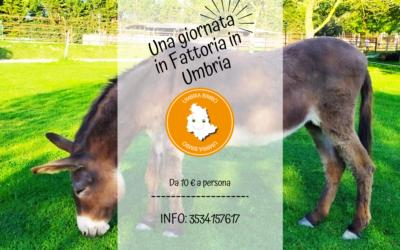 Una giornata in Fattoria didattica in Umbria