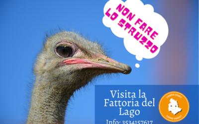 Visitare la Fattoria del Lago: Mucche, Struzzi, Arte e divertimento!