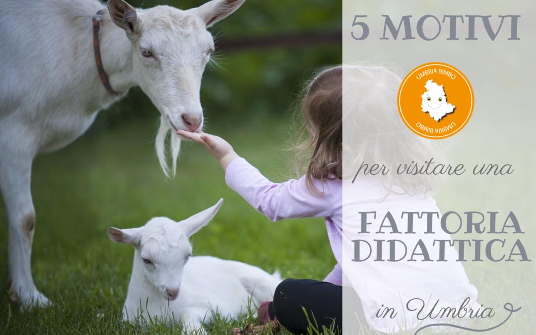 5 motivi per visitare una fattoria didattica in Umbria