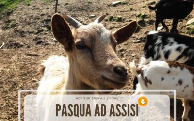 PASQUA in Agriturismo con Fattoria Didattica e Ristorante vicino Assisi