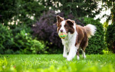 Offerta SETTEMBRE in Agriturismo Pet Friendly in Umbria con area cani!