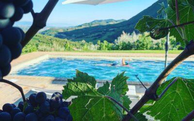 Offerta SETTEMBRE in Country House con piscina, alpaca e vineria in Umbria