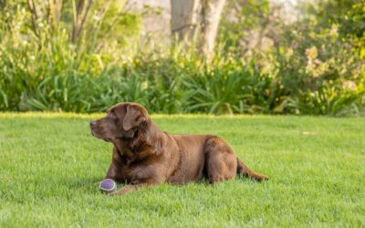 WEEKEND in Agriturismo Dog Friendly a Gualdo Tadino, Umbria