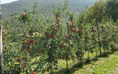 Lastminute AGOSTO in Agriturismo con ciclostazione e fattoria didattica in Valnerina!