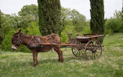 SETTEMBRE in vacanza in Umbria in borgo diffuso con fattoria didattica!